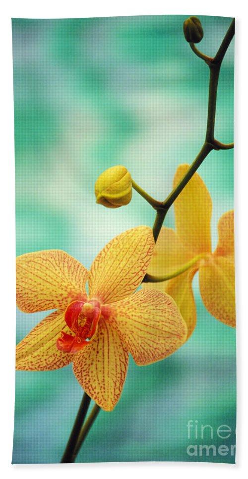 26-csm0163 Beach Towel featuring the photograph Dendrobium by Allan Seiden - Printscapes