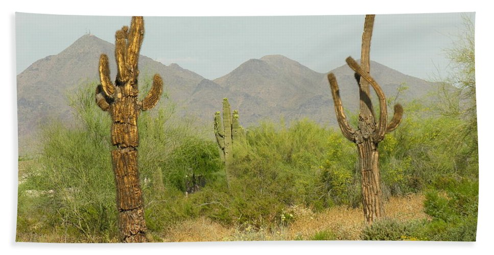 Cactus Beach Towel featuring the photograph Desert Cactus by Diane Greco-Lesser