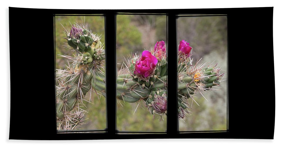 Cactus Beach Towel featuring the photograph Desert Cactus Triptych by Patti Deters