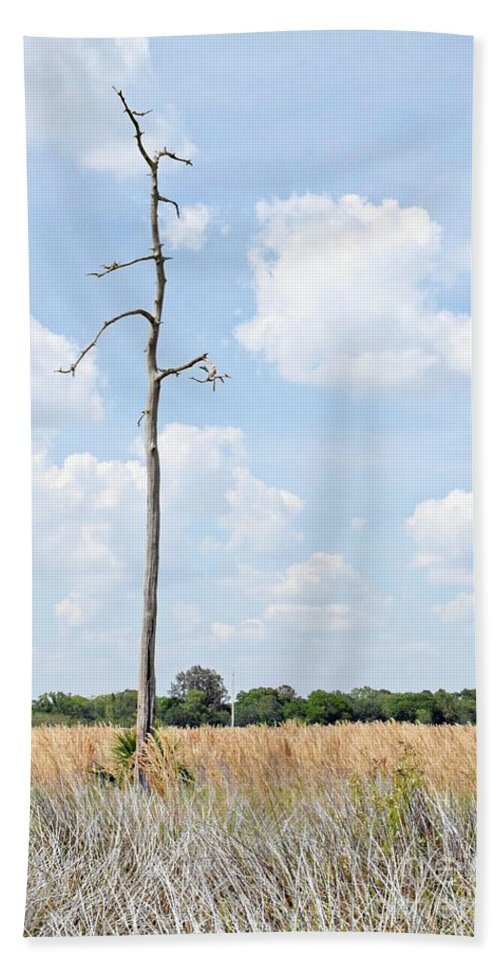 Minimal Beach Towel featuring the photograph Desolate Tree by Marnie Malone