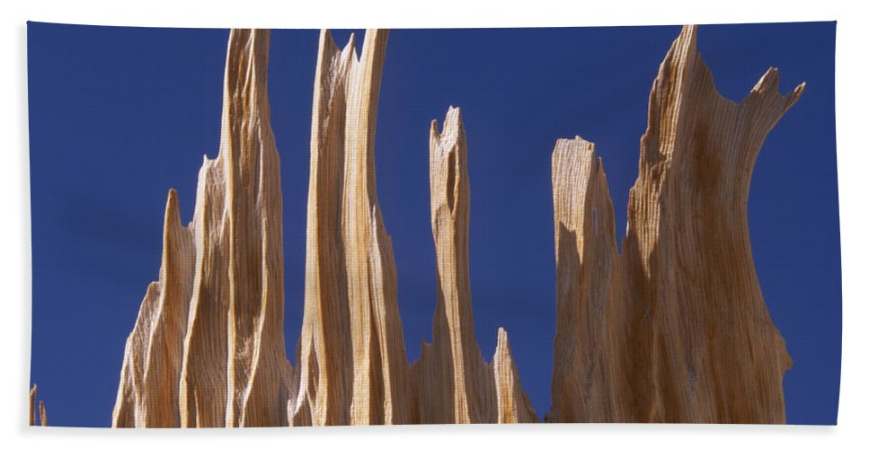 Bristlecone Pine Beach Towel featuring the photograph Detail Of Bristlecone Pine by Soli Deo Gloria Wilderness And Wildlife Photography