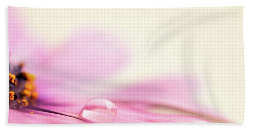 Daisy Beach Towel featuring the photograph Dew On A Daisy by Delphimages Photo Creations