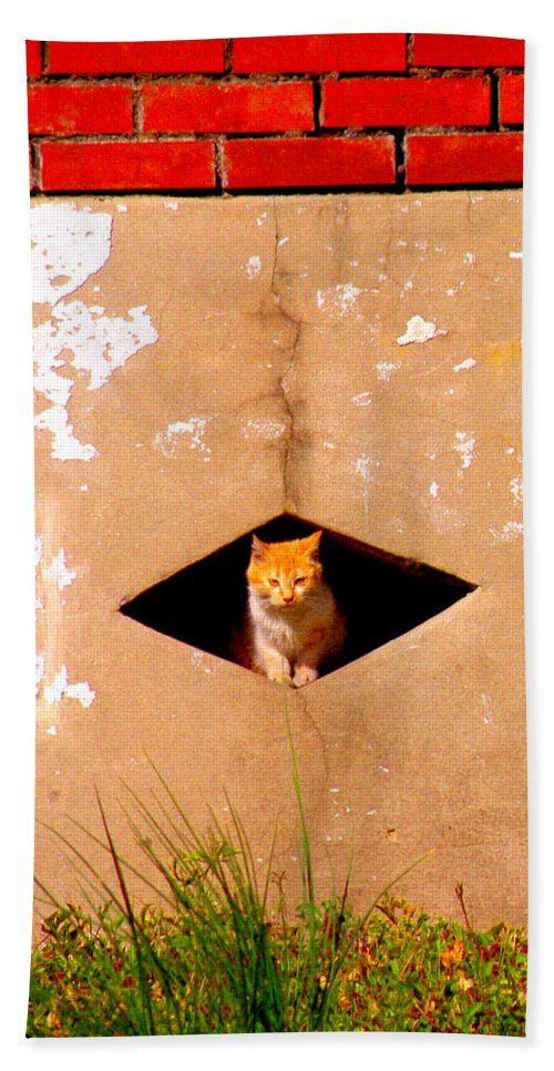 Cat Beach Towel featuring the photograph Diamond Kitty by Albert Stewart