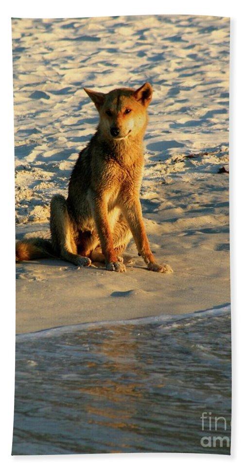 Dingo / Australia / Fraser Island Beach Towel featuring the photograph Dingo On The Beach by Gregory E Dean