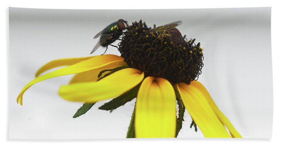 Black-eyed Susan Beach Towel featuring the photograph Dining Out by Sally Sperry