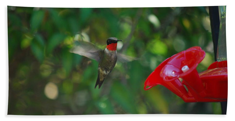Hummingbird Beach Towel featuring the photograph Dinner Time by Lori Tambakis