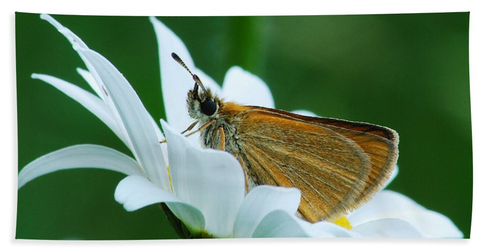 Daisy Beach Towel featuring the photograph Dion Skipper In Square by Michael Peychich