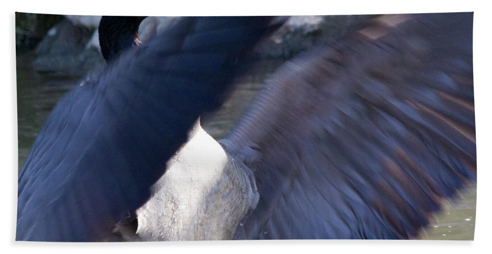 Goose Beach Towel featuring the photograph Director by Betsy Knapp
