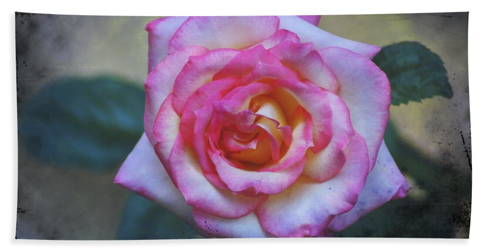 Dirty Beach Towel featuring the photograph Dirty Pink Rose by Bill Cannon