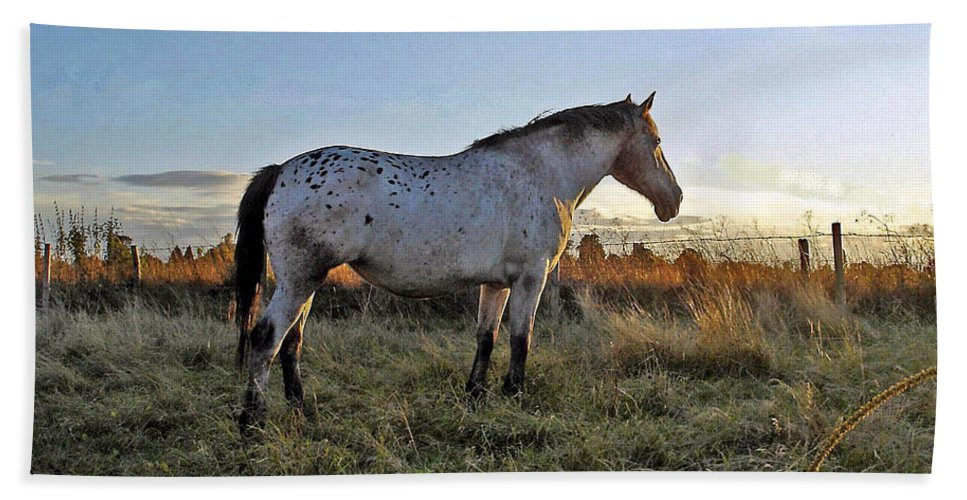 Appaloosa Beach Towel featuring the photograph Distant Thoughts by Susan Baker