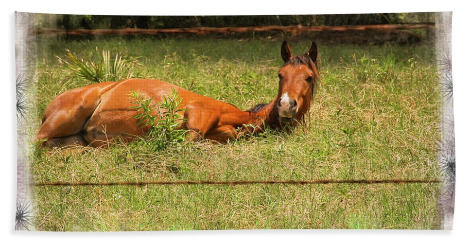 Horses Beach Towel featuring the photograph Disturbed Napping by Kim Henderson