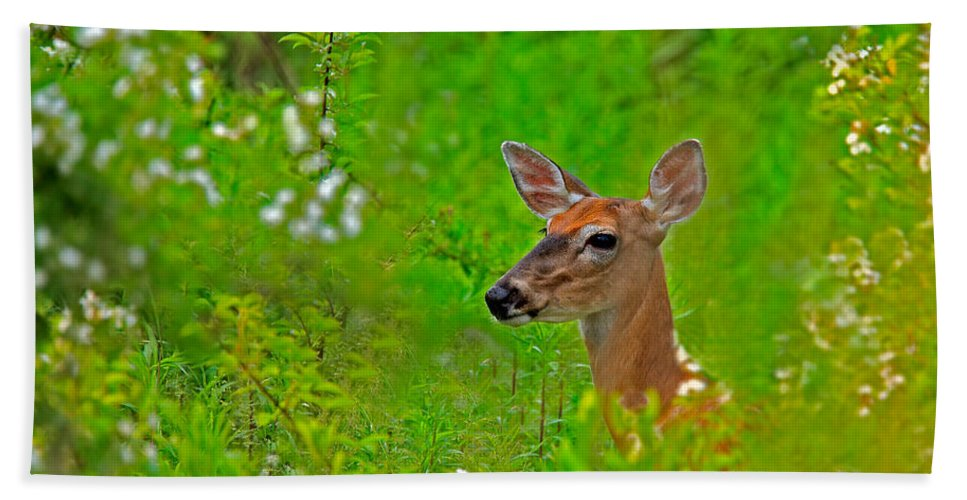 Deer Beach Towel featuring the photograph Doe In Springtime by William Jobes