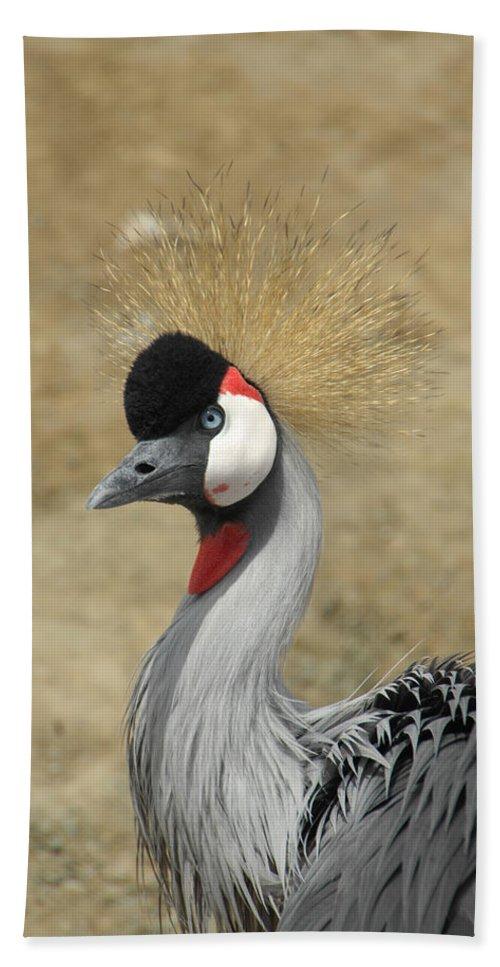 Bird Beach Towel featuring the photograph Does My Hair Look Ok by Donna Blackhall