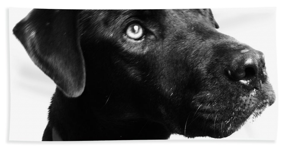 Dogs Beach Towel featuring the photograph Dog by Amanda Barcon