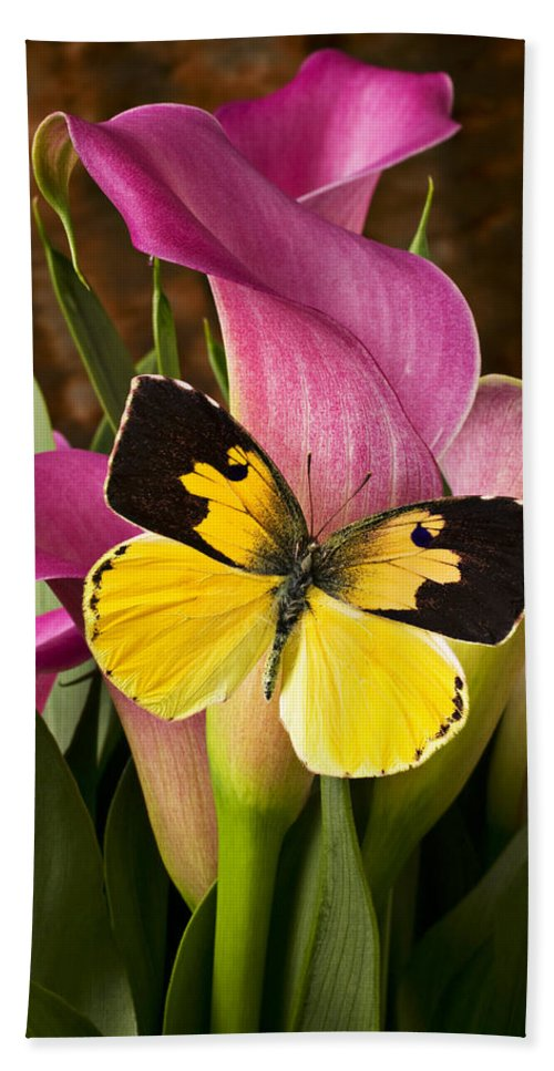 Butterfly Beach Towel featuring the photograph Dogface Butterfly On Pink Calla Lily by Garry Gay