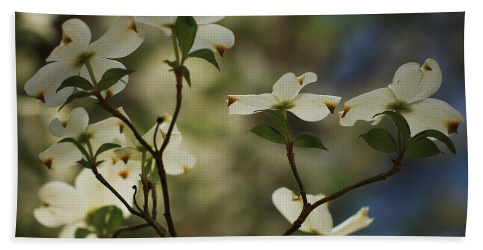 Spring Flowers Beach Towel featuring the photograph Dogwoods by Kim Henderson