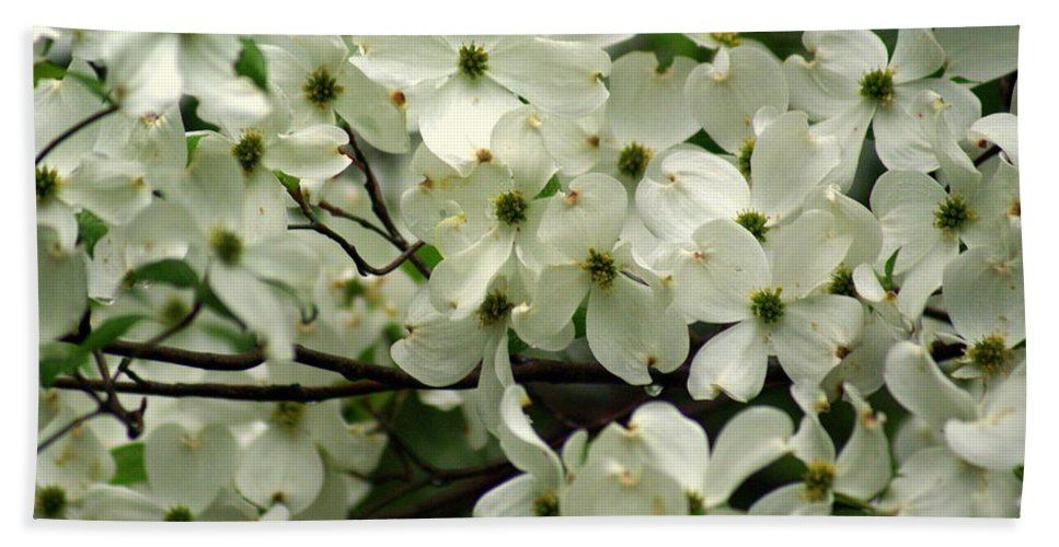 Dogwood Beach Towel featuring the photograph Dogwoods by Marty Koch