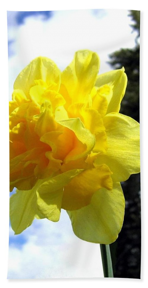 Daffodil Beach Towel featuring the photograph Double Daffodil by Will Borden