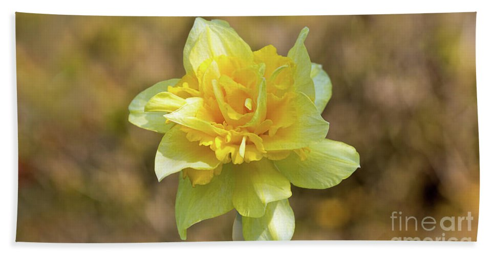Nature Beach Towel featuring the photograph Double Headed Daffodil by Peter McHallam