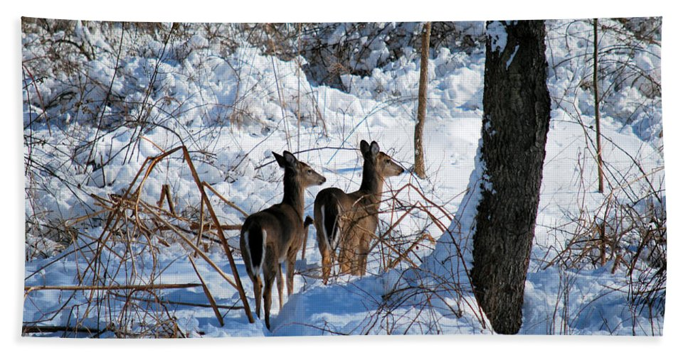 Deer Beach Towel featuring the photograph Double Look by Lori Tambakis