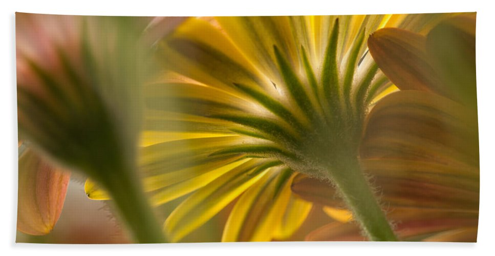 Greenwell Beach Towel featuring the photograph Down Among The Daisys by Sarah Greenwell