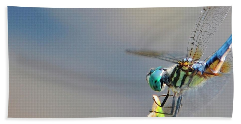 Insect Beach Towel featuring the photograph Dragon Flyer by David Arment