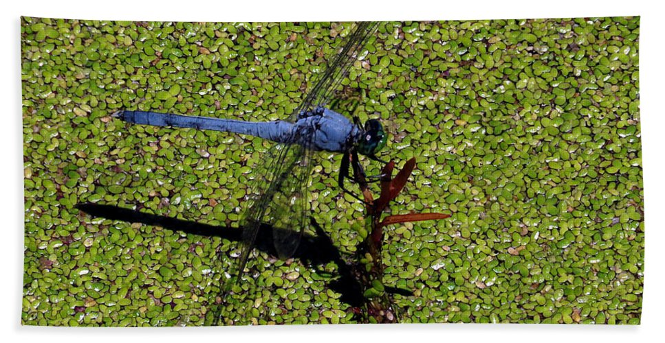 Dragonfly Beach Towel featuring the photograph Dragonfly 73 by J M Farris Photography