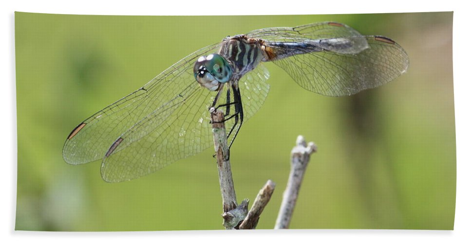 Dragonfly Beach Towel featuring the photograph Dragonfly Against Green Backdrop by Carol Groenen