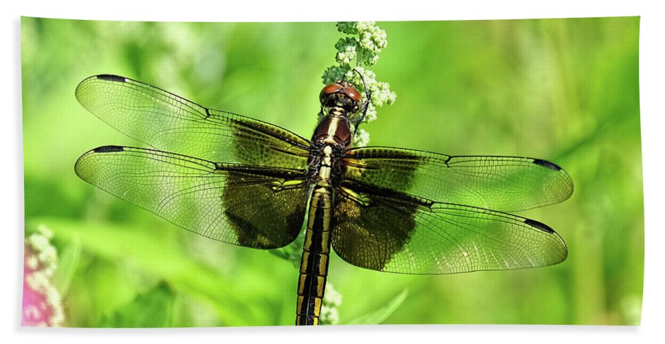 Dragonfly Beach Towel featuring the photograph Dragonfly Beauty by Ronda Ryan