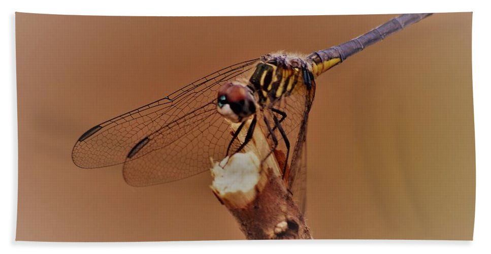 Dragonfly Beauty Beach Towel featuring the photograph Dragonfly Beauty by Warren Thompson
