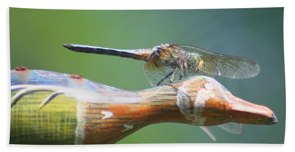 Dragonfly Beach Towel featuring the photograph Dragonfly Co Pilot by Smilin Eyes Treasures