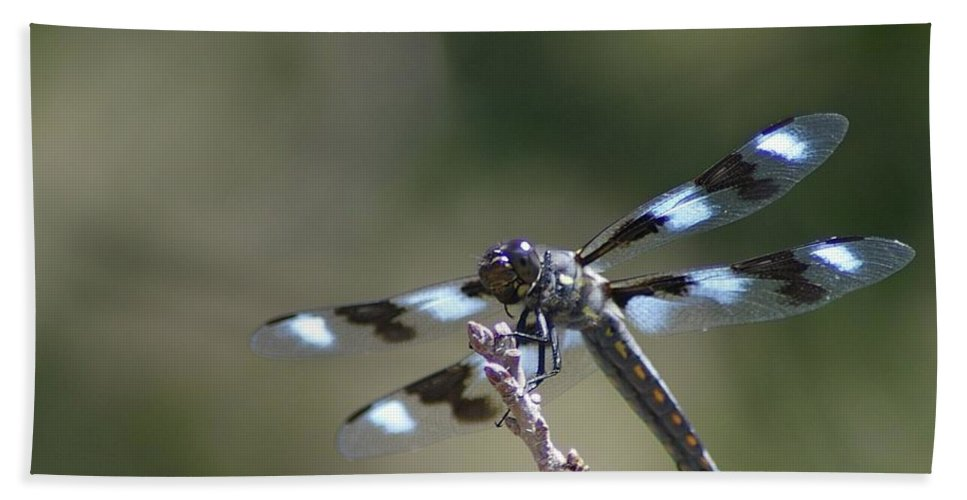 Dragonflies Beach Towel featuring the photograph Dragonfly Hanging On by Jeff Swan