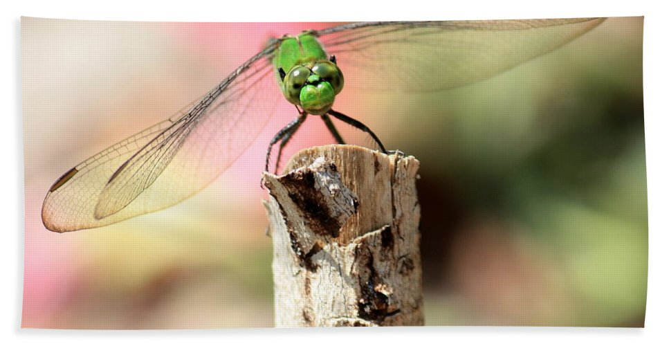 Dragonfly Beach Towel featuring the photograph Dragonfly In The Petunias by Carol Groenen