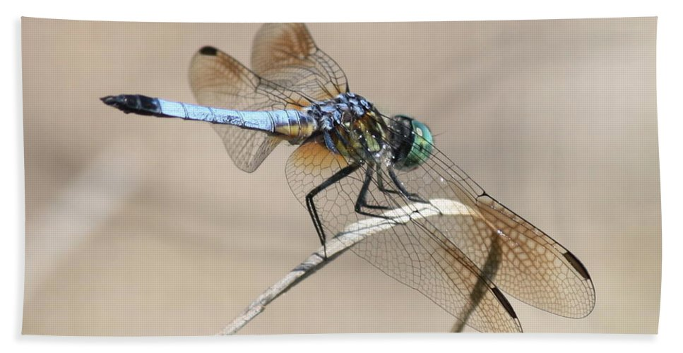 Dragonfly Beach Towel featuring the photograph Dragonfly On Bent Reed by Carol Groenen