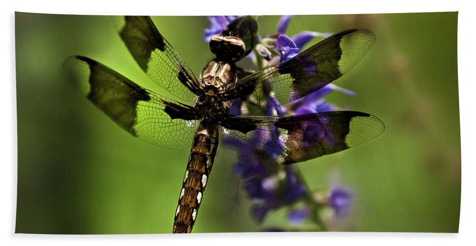 Dragon Fly Beach Towel featuring the photograph Dragonfly On Salvia by Onyonet Photo Studios