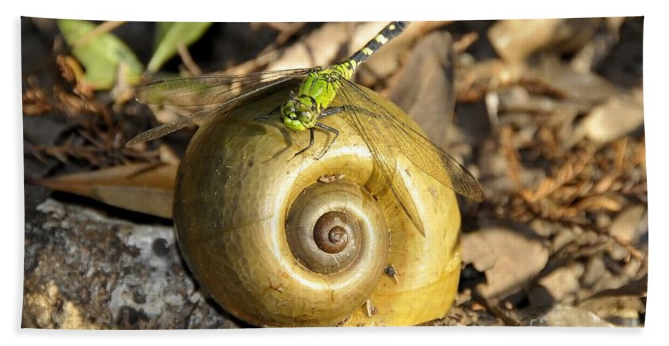 Dragonfly Beach Towel featuring the photograph Dragonfly On Snail by David Lee Thompson