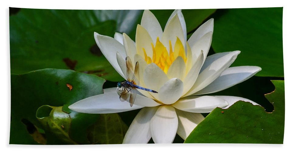 Dragonfly Beach Towel featuring the photograph Dragonfly On Waterlily by Allen Sheffield
