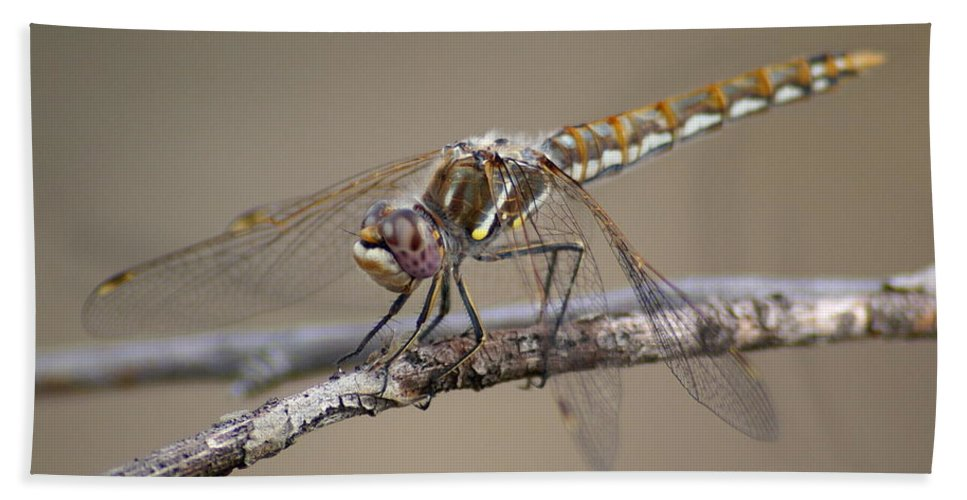 Spokane Beach Towel featuring the photograph Dragonfly Resting by Ben Upham III
