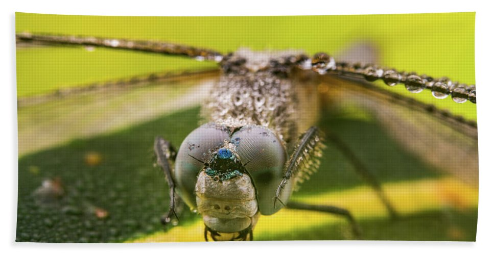 Action Beach Towel featuring the photograph Dragonfly Wiping Its Eyes by William Freebilly photography