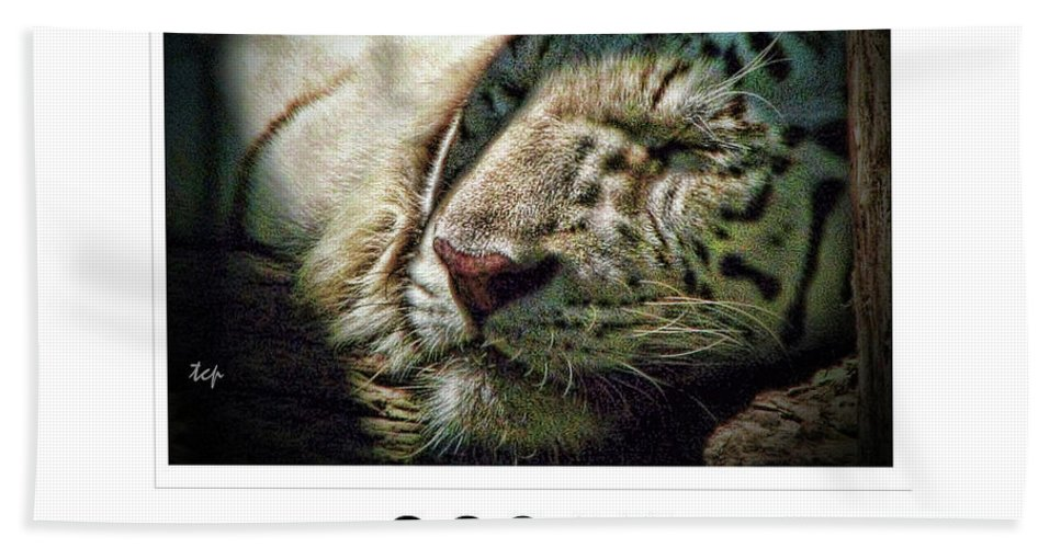 Tiger Beach Towel featuring the photograph Dream Bigger by Traci Cottingham