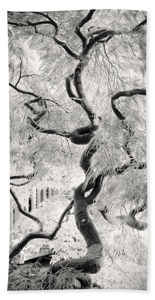 Bw Beach Towel featuring the photograph Dream Tree by Dorit Fuhg