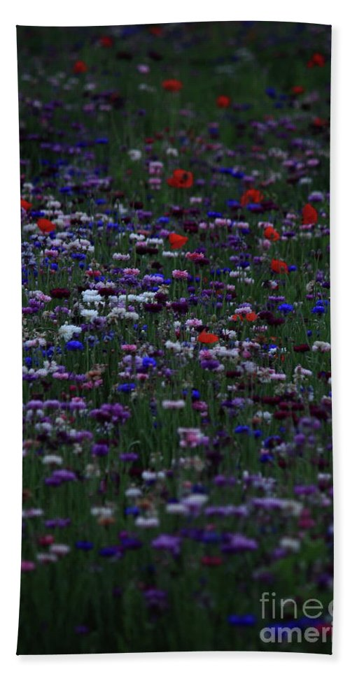 Flowers Beach Towel featuring the photograph Dreaming In Color by Lisa Porier