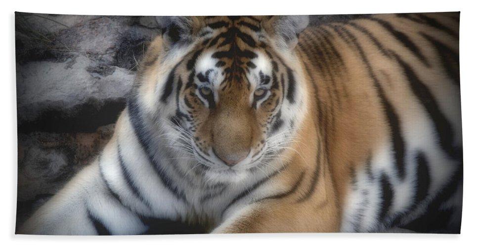 Aminal Kingdom Beach Towel featuring the digital art Dreamy Tiger by Sandy Keeton