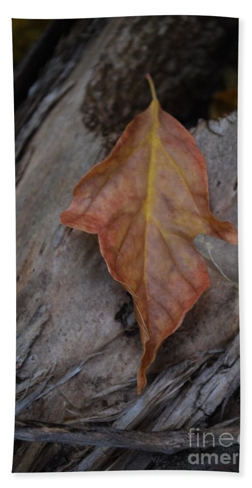 Fall Beach Towel featuring the photograph Dried Leaf On Log by Heather Kirk