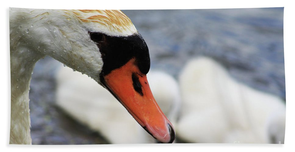 Swan Beach Towel featuring the photograph Drippy Nose by Alyce Taylor