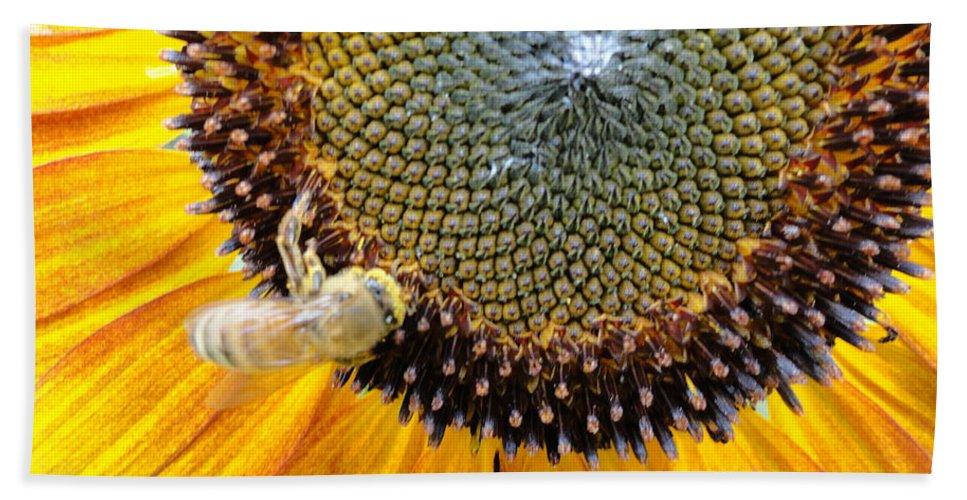 Sunfllower Beach Towel featuring the photograph Drunken Bee by Trish Hale