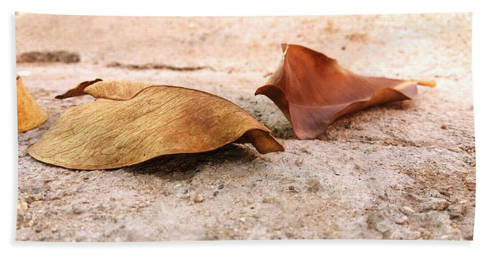 Dry Leaves Beach Towel featuring the photograph Dry Leaves by Gnaneshwar Gurram