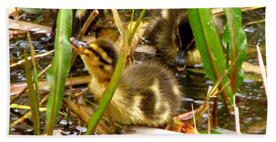 Duck Beach Towel featuring the photograph Ducklings 1 by J M Farris Photography