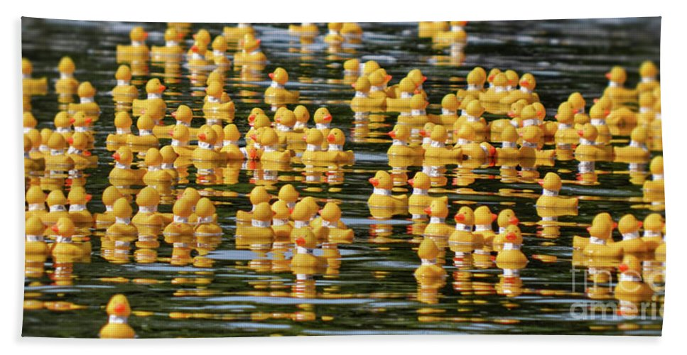 Yellow Beach Towel featuring the photograph Ducks In A Row by Traci Cottingham