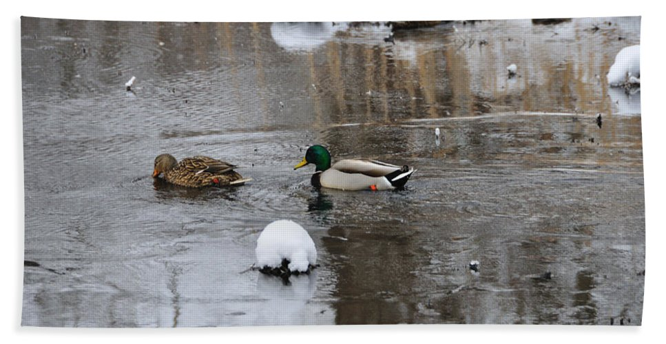 Ducks Beach Towel featuring the photograph Ducks In Winter by David Arment